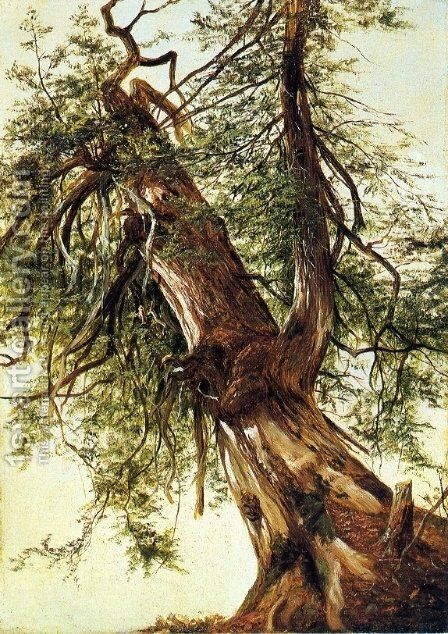 Study of a Cedar by David Johnson - Reproduction Oil Painting