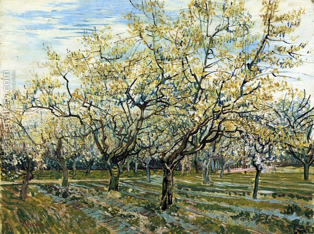 Orchard With Blossoming Plum Trees Painting By Vincent Van