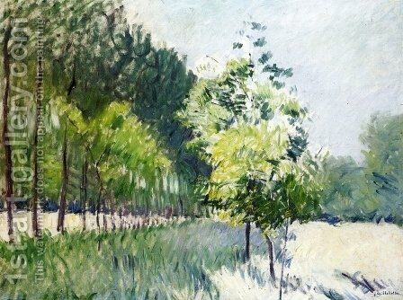 Lane Bordered by Trees by Gustave Caillebotte - Reproduction Oil Painting