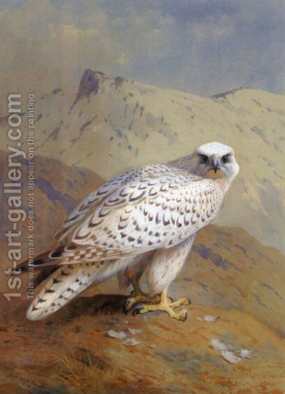 A Greenland, or Gyr Falcon by Archibald Thorburn - Reproduction Oil Painting