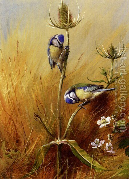 Bluetits On A Teasel by Archibald Thorburn - Reproduction Oil Painting