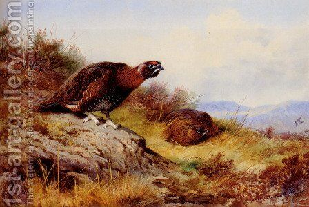 Red Grouse On The Moor by Archibald Thorburn - Reproduction Oil Painting