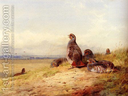 Red Partridges by Archibald Thorburn - Reproduction Oil Painting