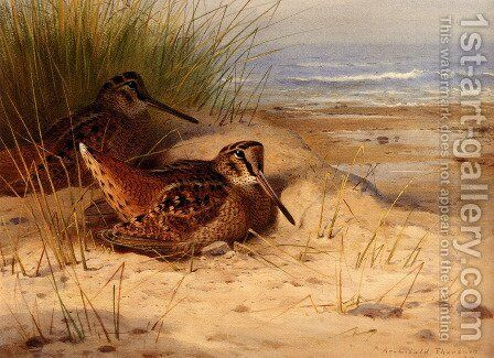 Woodcock Nesting On A Beach by Archibald Thorburn - Reproduction Oil Painting