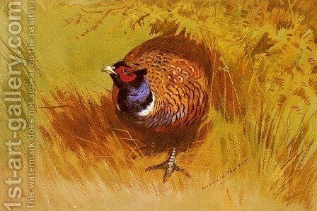 A Cock Pheasant by Archibald Thorburn - Reproduction Oil Painting