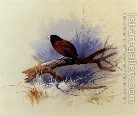 A Nepalese black-headed nun in the branch of a tree by Archibald Thorburn - Reproduction Oil Painting