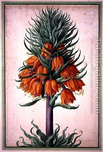 Fritillaria imperialis (crown imperial) plate 25 from the Nassau Florilegium by Johann Jakob Walther - Reproduction Oil Painting