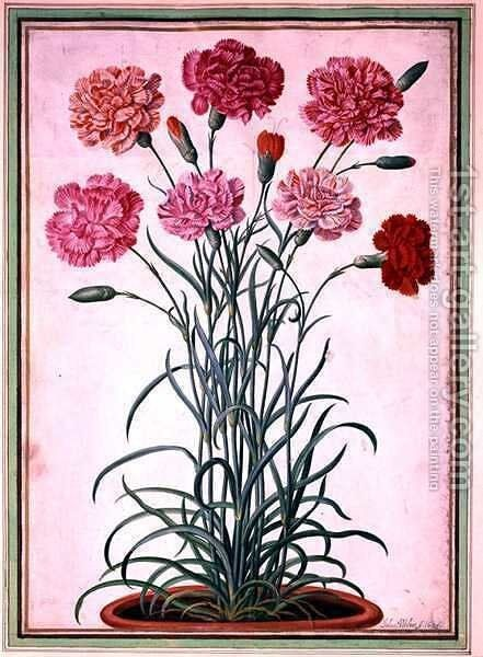 Carnations growing from a pot, plate 25 from the Nassau Florilegium by Johann Jakob Walther - Reproduction Oil Painting