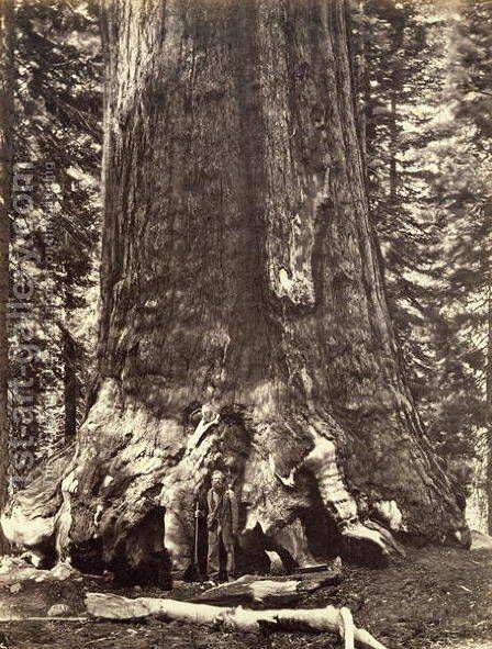 Base of the Grizzly Giant, from The Yosemite Book: A Description of the Yosemite Valley and the Adjacent Region of the Sierra Nevada, and of the Big Trees of California, by Josiah Dwight Whitney (1819-96) published 1868 by Carleton Emmons Watkins - Reproduction Oil Painting