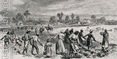 Labour in the Cotton Fields, Hoeing the Young Plants, illustration from Harpers Weekly, 1867, from The Pageant of America, Vol.3, by Ralph Henry Gabriel, 1926 by Alfred R. Waud - Reproduction Oil Painting