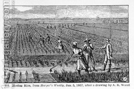 Hoeing Rice, illustration from Harpers Weekly, 1867, from The Pageant of America, Vol.3, by Ralph Henry Gabriel, 1926 by Alfred R. Waud - Reproduction Oil Painting