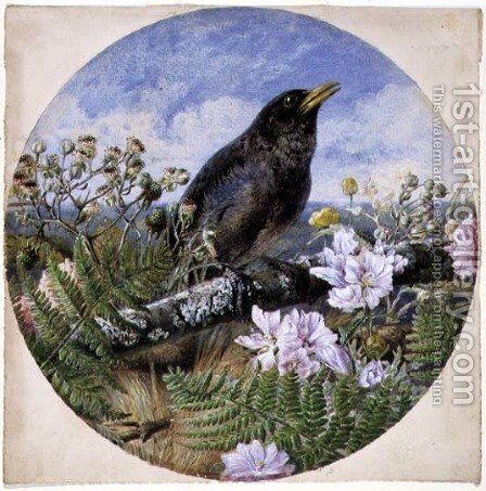 Blackbird, 1864 by Harrison William Weir - Reproduction Oil Painting