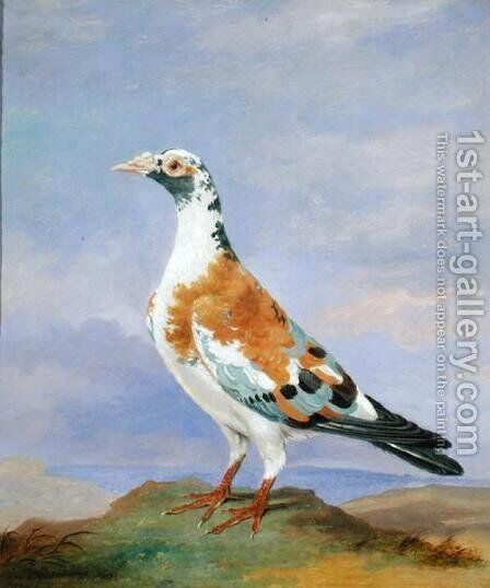 Grizzle Carrier Pigeon by Dean Wolstenholme, Jr - Reproduction Oil Painting