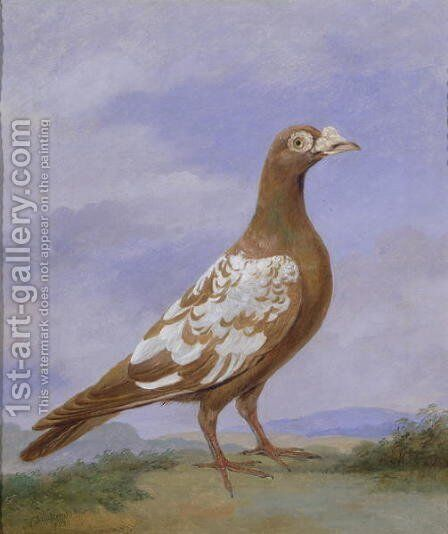 Red Pied Carrier Pigeon by Dean Wolstenholme, Jr - Reproduction Oil Painting