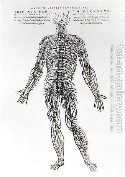 Nervous System by Andreas Vesalius - Reproduction Oil Painting