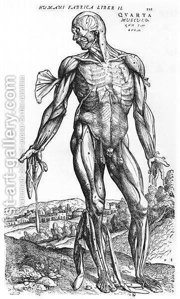 Anatomical Study, illustration from De Humani Corporis Fabrica by Andreas Vesalius 1514-64 Basel, 1543 by Andreas Vesalius - Reproduction Oil Painting