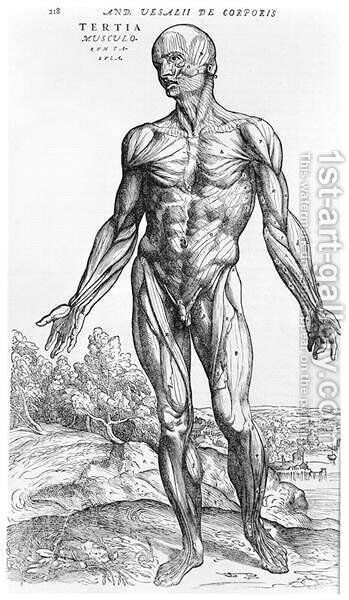 Anatomical Study, illustration from De Humani Corporis Fabrica by Andreas Vesalius 1514-64 Basel, 1543 3 by Andreas Vesalius - Reproduction Oil Painting