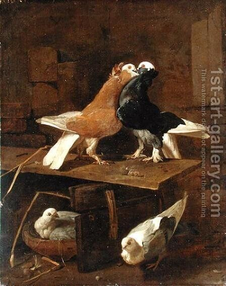 Pigeons by Jacomo (or Victor, Jacobus) Victors - Reproduction Oil Painting