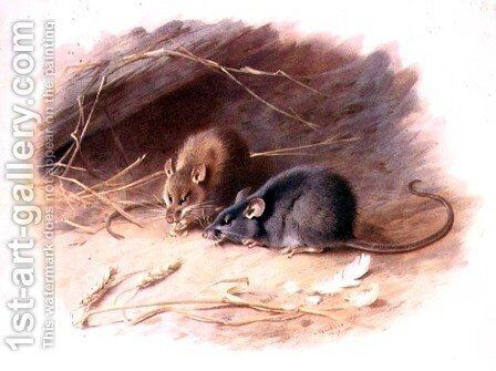 Mus alexandrinus and Mus rattus Alexandrine Rat and Black Rat plate 29 of British Mammals, 1919, pub. 1921 by Archibald Thorburn - Reproduction Oil Painting