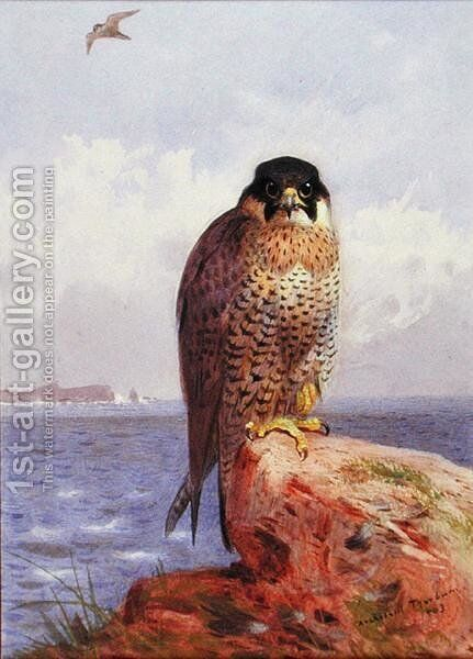 A Peregrine Falcon by the Sea, 1903 by Archibald Thorburn - Reproduction Oil Painting