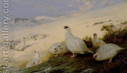 Ptarmigan, 1903 by Archibald Thorburn - Reproduction Oil Painting
