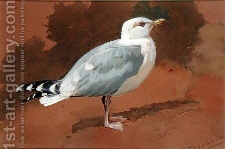 Gull by Archibald Thorburn - Reproduction Oil Painting