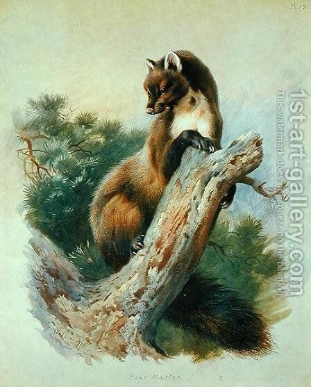 Pine Marten, 1919 by Archibald Thorburn - Reproduction Oil Painting