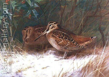 Woodcock in the Undergrowth by Archibald Thorburn - Reproduction Oil Painting