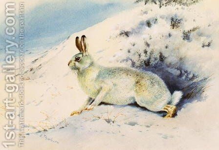 Hare by Archibald Thorburn - Reproduction Oil Painting