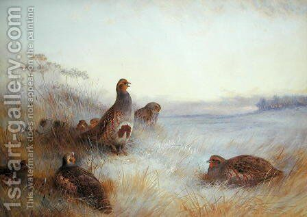 Partridges in Early Morning, 1910 by Archibald Thorburn - Reproduction Oil Painting
