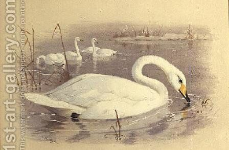 Swans on Water by Archibald Thorburn - Reproduction Oil Painting