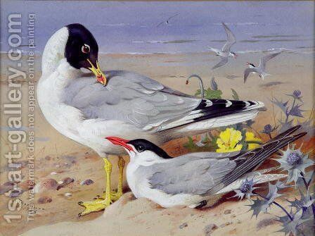 Black headed gulls by Archibald Thorburn - Reproduction Oil Painting