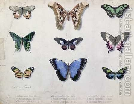 Butterflies from Brazil and Guyana, mid 19th century by Edouard Travies - Reproduction Oil Painting
