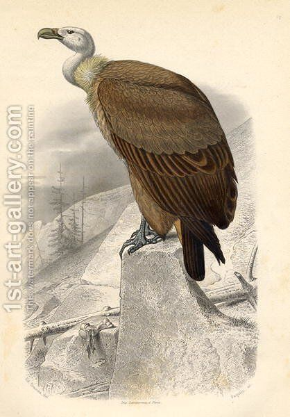 The Fawn Vulture, engraved by Paquien by Edouard Travies - Reproduction Oil Painting