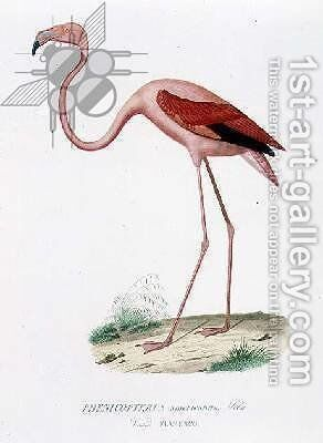 Phenicopterus americanus Flamenco sic engraved by Fournier, pub. by Bougeard by Edouard Travies - Reproduction Oil Painting
