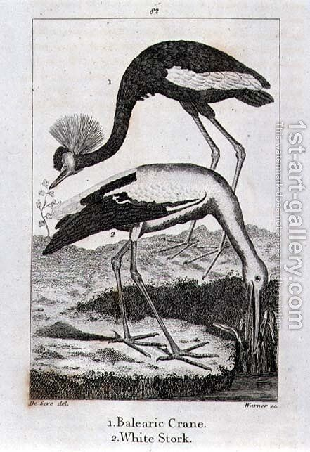 Balearic Crane and White Stork, from History of the Earth and Animated Nature, by Oliver Goldsmith, published in London, 1816 by Jacques de Seve - Reproduction Oil Painting