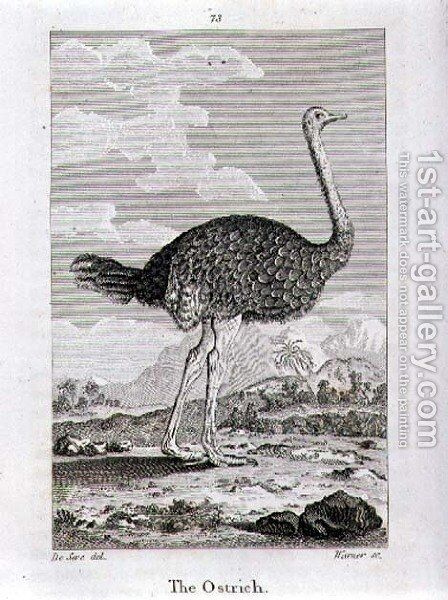 The Ostrich, from A History of the Earth and Animated Nature, by Oliver Goldsmith, published in London, 1816 by Jacques de Seve - Reproduction Oil Painting
