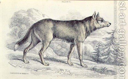 Lyciscus cagottis Mexican Coyote 1845, plate 6 from Vol 4 of Sir William Jardines The Naturalists Library, pub. 1833-45 by Colonel H. Smith - Reproduction Oil Painting