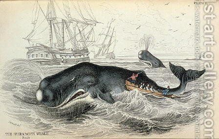 The Spermaceti Whale, engraved by William Home Lizars (1788-1859) plate 9 from Vol 12 of Sir William Jardines Naturalists Library, pub. 1833-45 by (after) Stewart, James - Reproduction Oil Painting