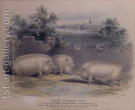 Three prize pigs bred by Prince Albert at Windsor Castle,engraved by H. Stafford fl.1829 1843, by H. Strafford - Reproduction Oil Painting