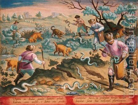 Italian Vipers Eating Toads, plate 60 from Venationes Ferarum, Avium, Piscium Of Hunting Wild Beasts, Birds, Fish engraved by Jan Collaert 1566-1628 published by Phillipus Gallaeus of Amsterdam by Jan van der (Joannes Stradanus) Straet - Reproduction Oil Painting