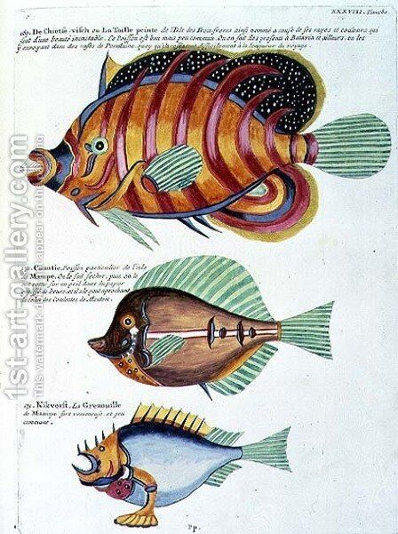 Three Fish, plate 38 from Vol 2 of Fish, Crayfish and Crabs, pub. 1754 by (after) Renard, Louis - Reproduction Oil Painting