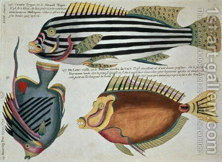 Three Fish, plate 31 from Vol 2 of Fish, Crayfish and Crabs, pub. 1754 by (after) Renard, Louis - Reproduction Oil Painting