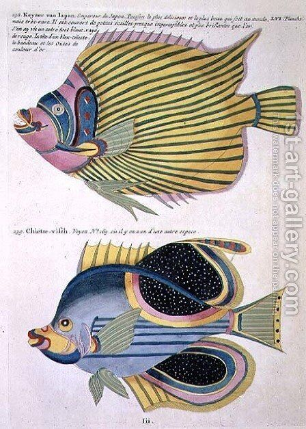 Two Fish, plate 56 from Vol 2 of Fish, Crayfish and Crabs, pub. 1754 by (after) Renard, Louis - Reproduction Oil Painting