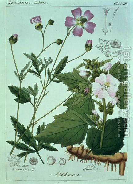 Althaea officinalis Marsh Mallow plate 173, illustration from Icones Florae Germanicae Helveticae..., Tom 5, 1844 by Heinrich Gottlieb Ludwig Reichenbach - Reproduction Oil Painting