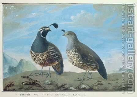 Male and Female Californian Partridge, from Voyage de La Perouse by J.R Prevost - Reproduction Oil Painting