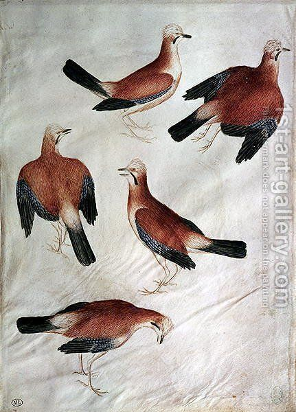 Five Jays, from the Vallardi Album by Antonio Pisano (Pisanello) - Reproduction Oil Painting
