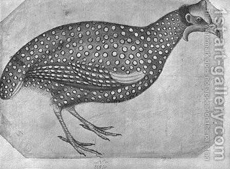 Guinea Fowl, from the The Vallardi Album by Antonio Pisano (Pisanello) - Reproduction Oil Painting