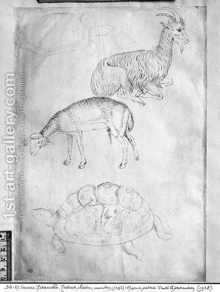 Two tortoises, goat and sheep, from the The Vallardi Album by Antonio Pisano (Pisanello) - Reproduction Oil Painting