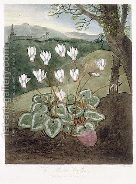 The Persian Cyclamen, engraved by Elmes, from The Temple of Flora by Robert Thornton, pub. 1804 by Abraham Pether - Reproduction Oil Painting